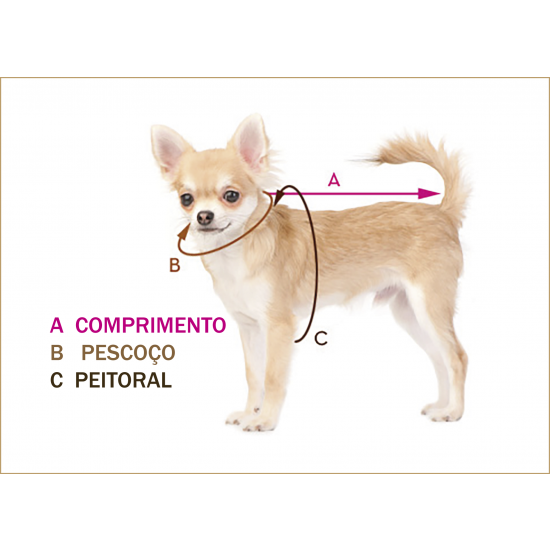 cachorro modelo