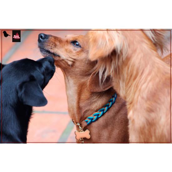 coleira artesanal tranca larga no cachorro